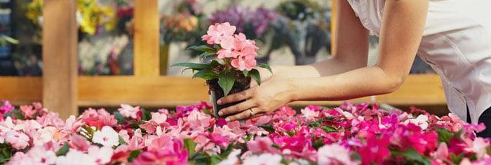 花屋 フローリスト オーストラリア